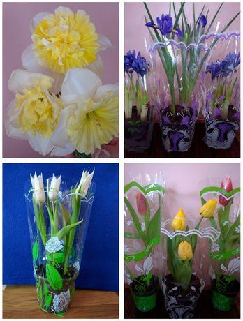Тюльпан, ирис, нарцисс в горшках к 8 марта, срез нарцисса.