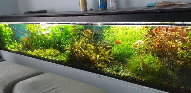 Roślinki do akwarium 12 odmian
