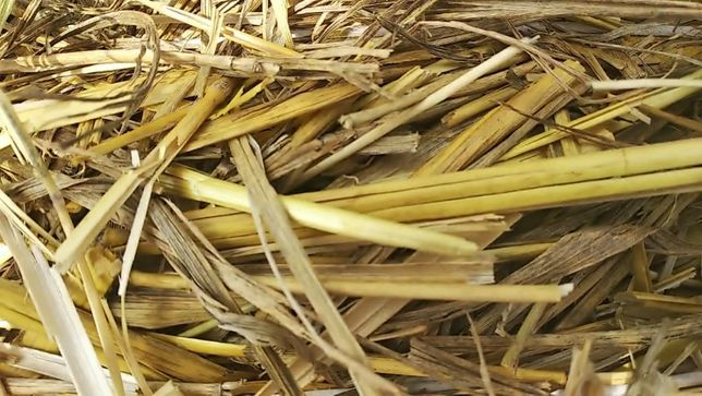 Солома (без ГМО)