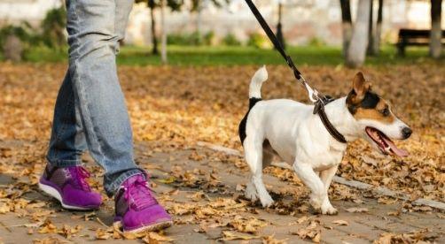 Passear e cuidar do seu cão