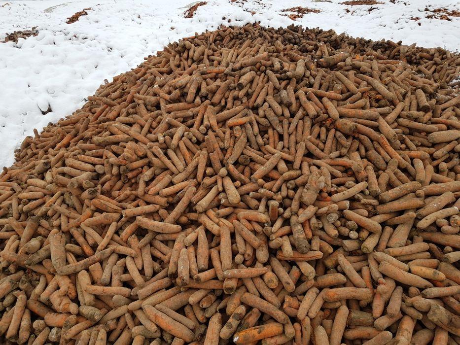 Marchew  pietruszka ziemniaki Ujma Duża - image 1
