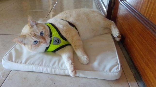 Coleira para gato ou cao