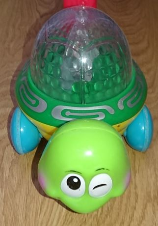 Pchacz żółwik świecący i grający