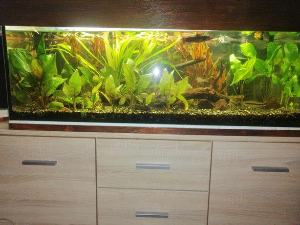 Akwarium z wyposażeniem i życiem