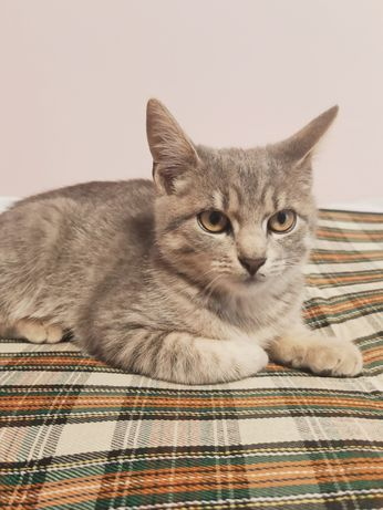 Котеня шукає дбайливих господарів