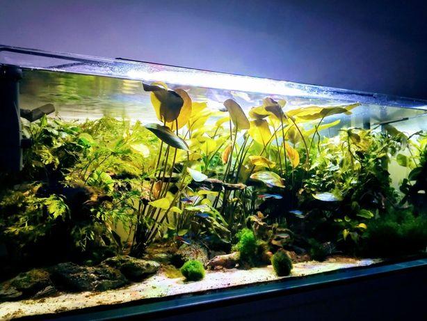 Akwarium optiwhite 90x45x35, 140 L + szafka akwarystyczna