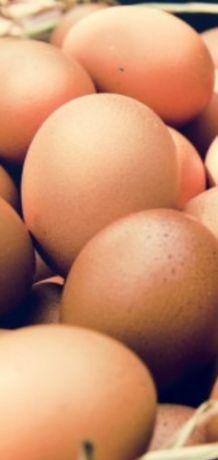 Stuletnie,świeże jaja