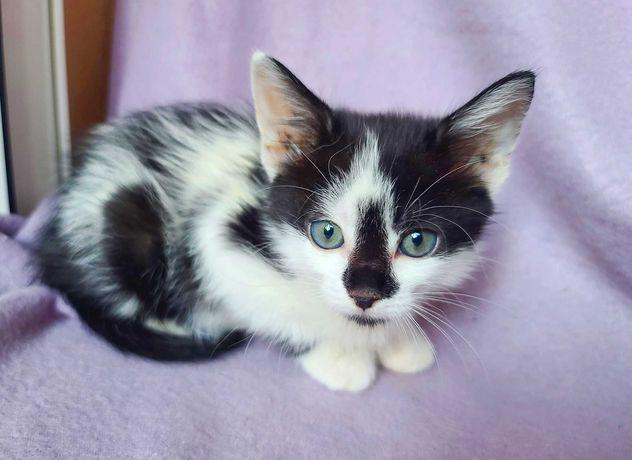 котенок Ума кошечка котеня кошка (2 месяца) Срочно! котик