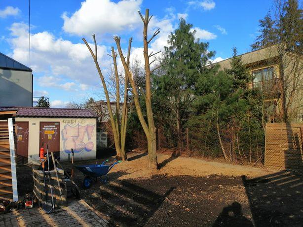 Wycinka drzew, podcinka gałęzi oraz czyszczenie działek