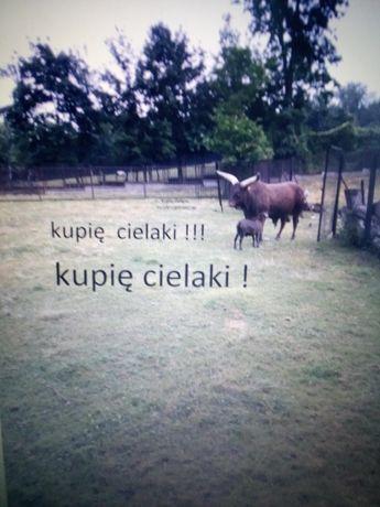 Cielaczki byczki i jaloszki