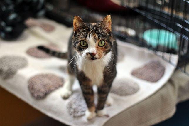 Rosa- kotka do adopcji