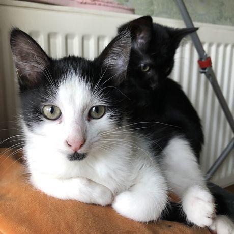 Котенята шукають сім'ю. Хлопчик і дівчинка 3 місяці