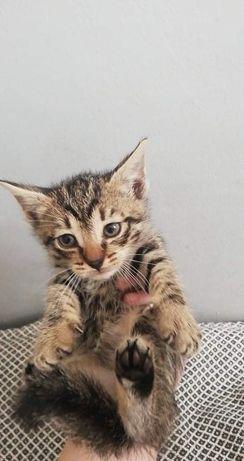 Oddam kota i kotkę (matkę)
