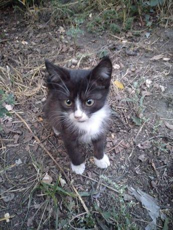 Отдам котёнка-девочку Кетти