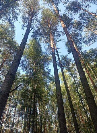 Sprzedam drzewo Tartaczne /Kłoda