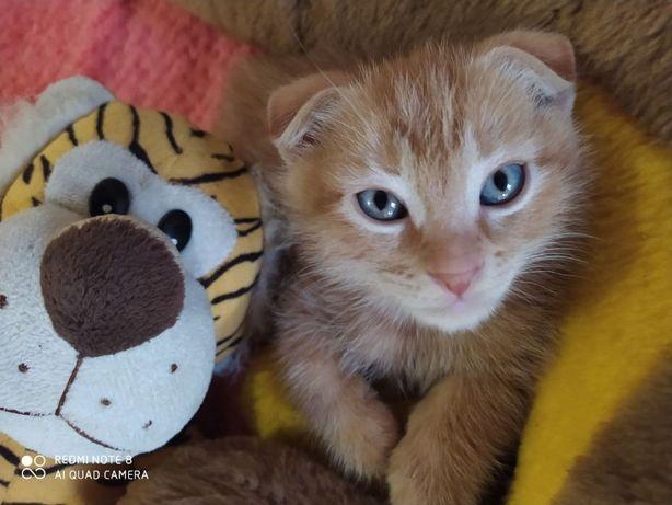 Милый тигренок-нежный рыжий котенок