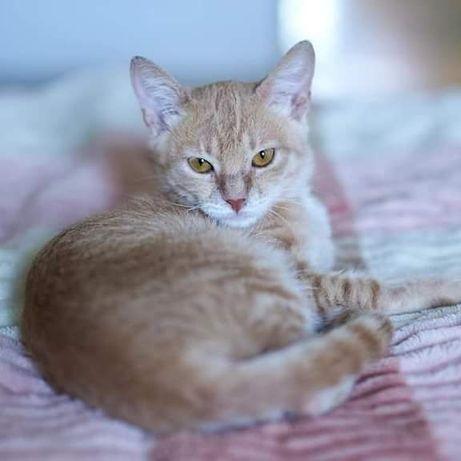 Котенок девочка невероятной красоты