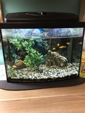 Sprzedam akwarium z wyposażeniem