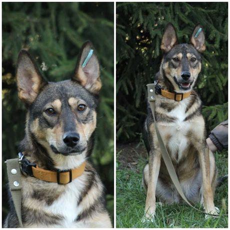Красивая активная собачка Ариша, собака, стерилизована, 1 год