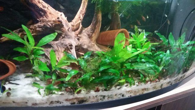 Zestaw roślin do akwarium 50l