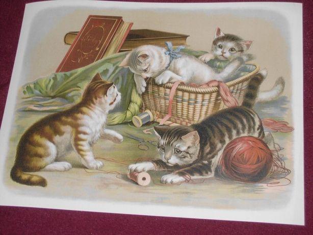 Zwierzęta - Koty, Papugi reprodukcje XIX w. grafik 40x30 cm - Wysyłka
