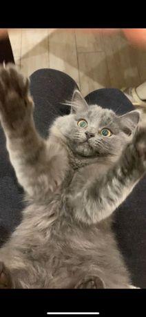 Котенок красивый умный ищет дом любящие добрые руки