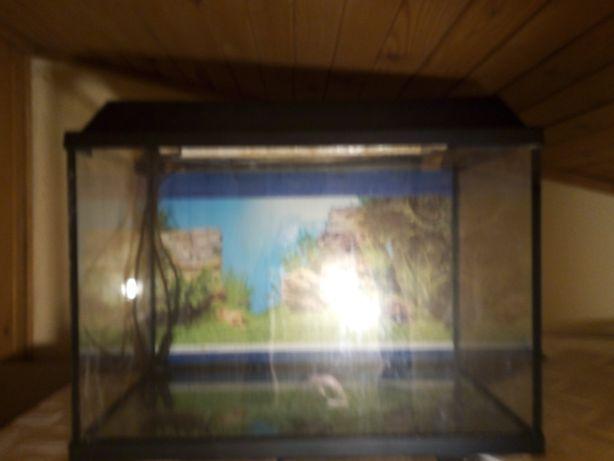 Akwarium 60l z pokrywą i tłem