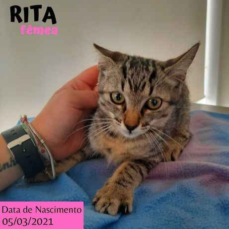 Gatinha 4 meses para adoção (Rita)