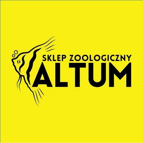 Neon Innesa - 100 sztuk - Sklep Zoologiczny ALTUM