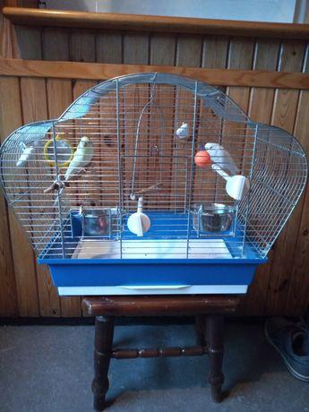 Papużki faliste + klatka