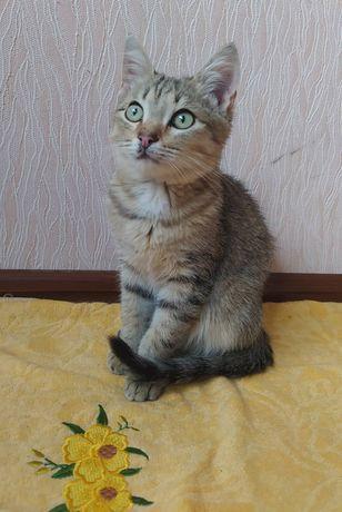 Отдам котят_ котята_ в хорошие руки Тимка