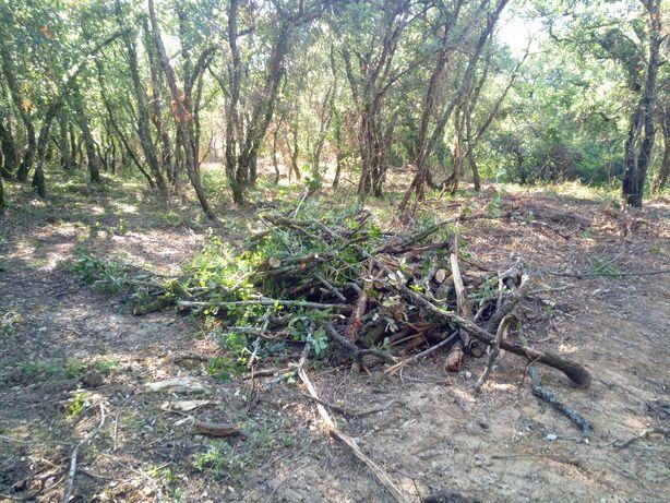 Limpeza florestal e Jardim manuntenção
