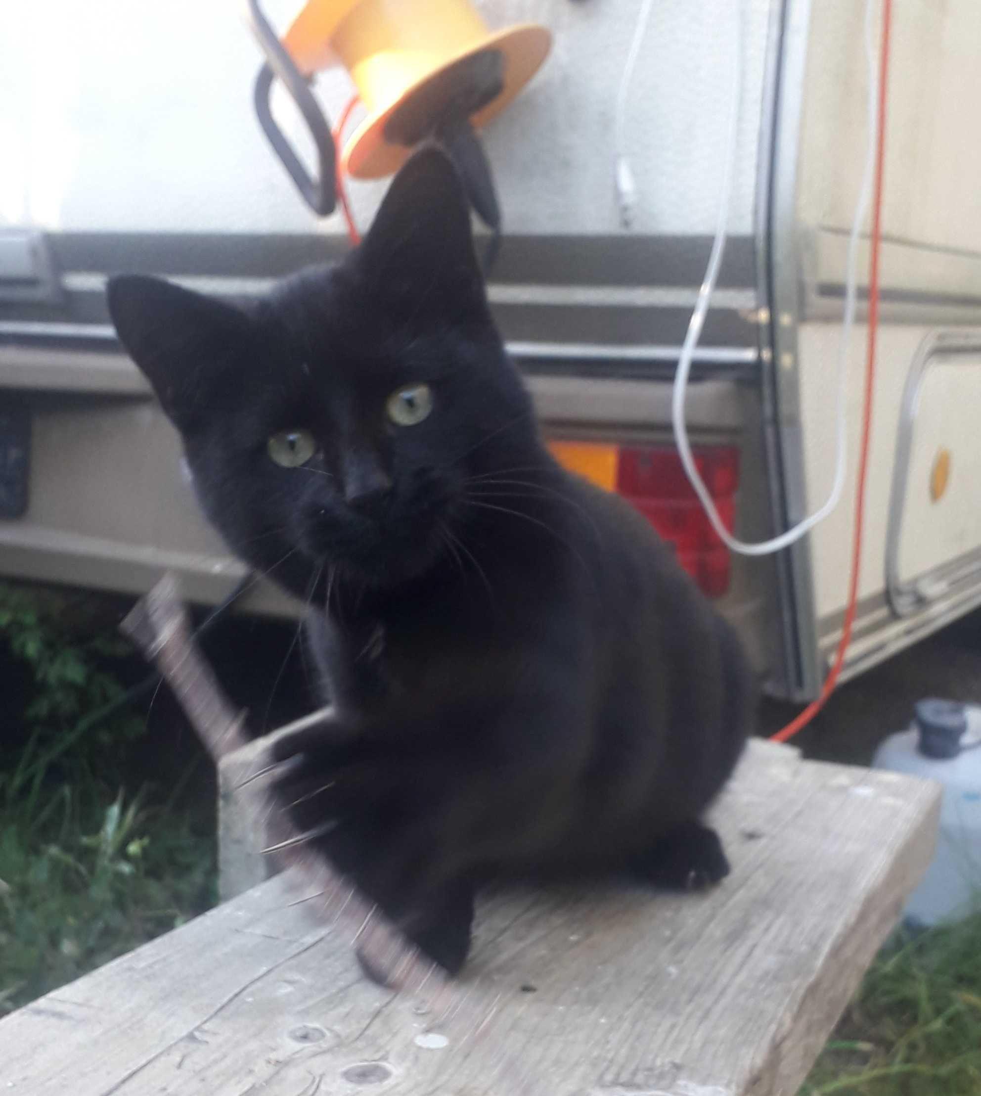 Koteczka szuka domu!
