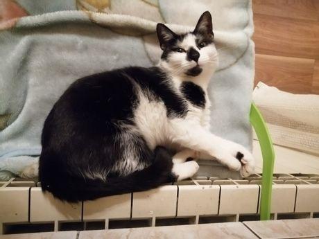 zaginęła biało-czarna kotka z czarną plamką na nosie