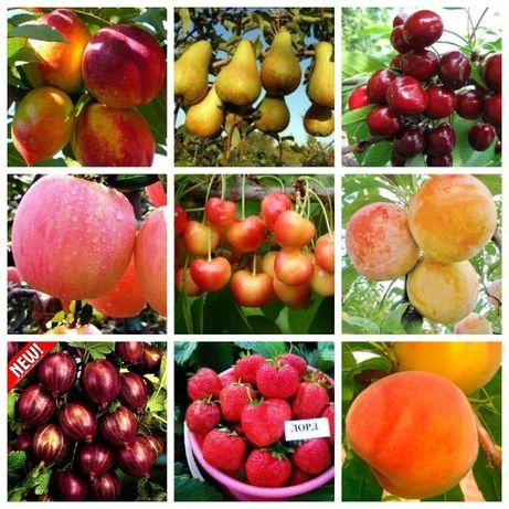 Саженцы яблони,груша,персик,смородина,вишня,черешня,малина,клубника.