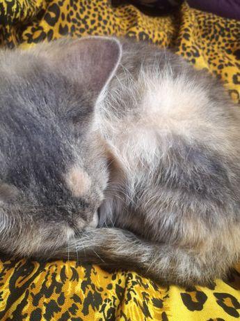 Умная девочка мышеловка, котенок ищет дом