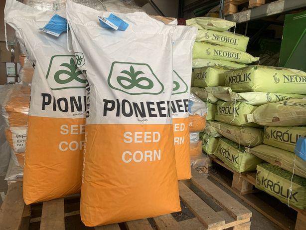 Materiał siewny kukurydzy Pioneer , nasiona Pioneer kukurydza Pioneer