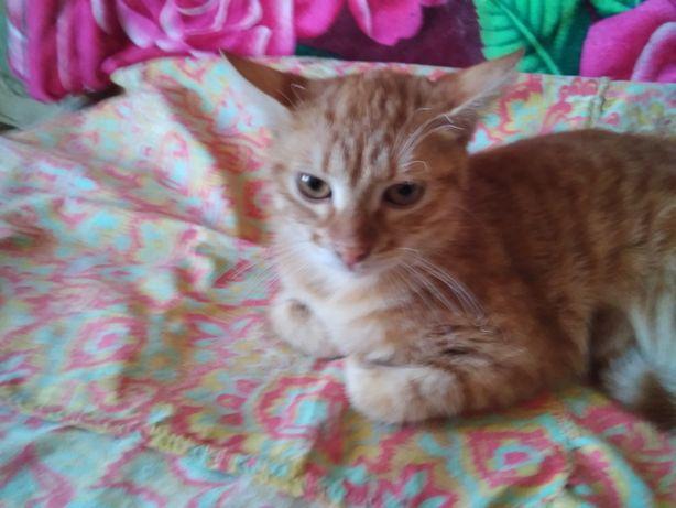 Солнечнорыжий  котик