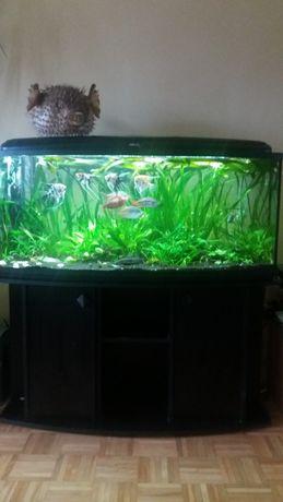 AQUAEL akwarium ze specjalistycznym stolikiem zewzmocnionym stelażem