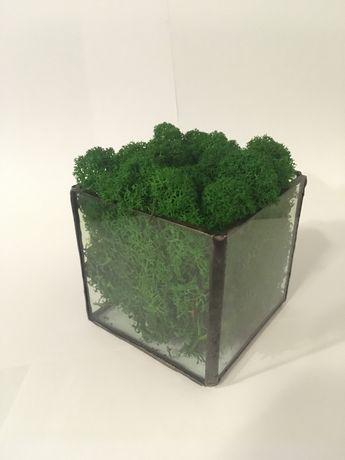 Кашпо с мхом «КУБ», Стабілізованний мох в Скляном кашпо