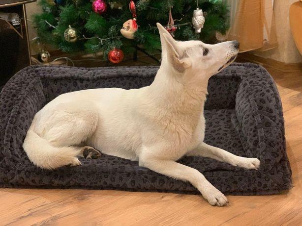 Диван - теплая лежанка для собаки РАСПРОДАЖА можно БЕЗ НАПОЛНИТЕЛЯ