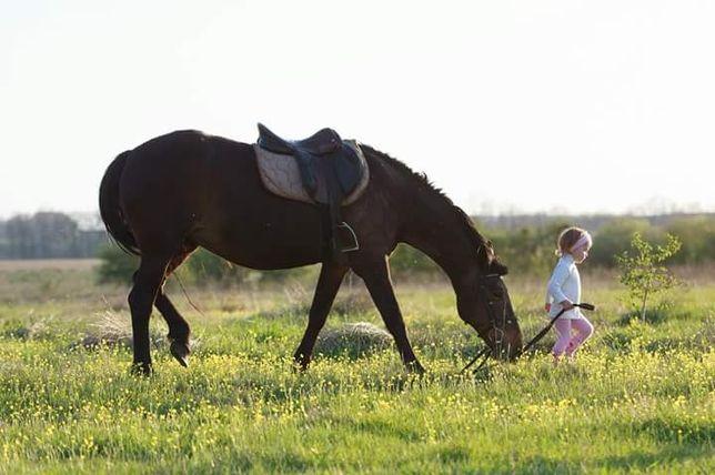 Прогулки на лошадях,конные прогулки ,катание на лошади