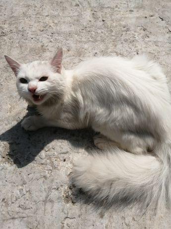 Нашлась белая кошка