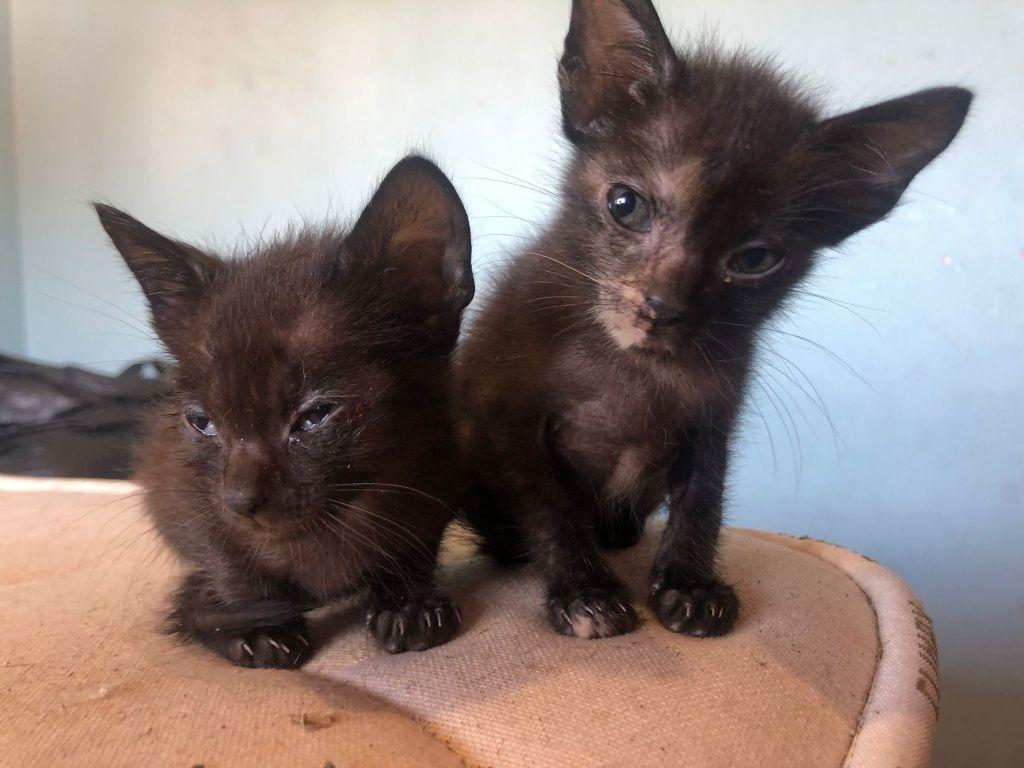 Gatos para adoção (Marvila) Lisboa