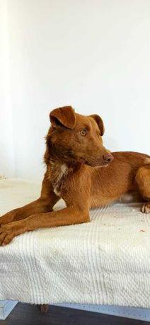 Ernesto - cão porte médio