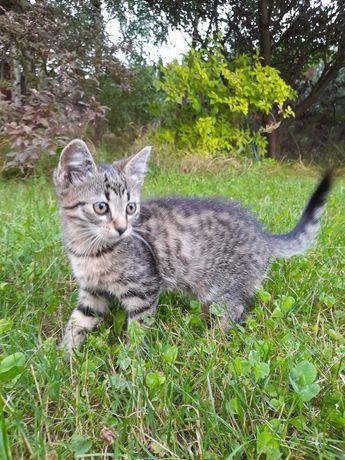 Młody kotek, mały kot