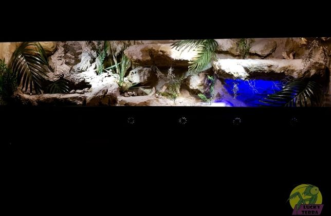 Nowe terrarium dla kameleona, agamy, weza, gekona od LuckyTerra.