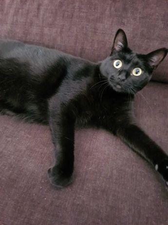 Doação gato Nya (fêmea) com 2anos