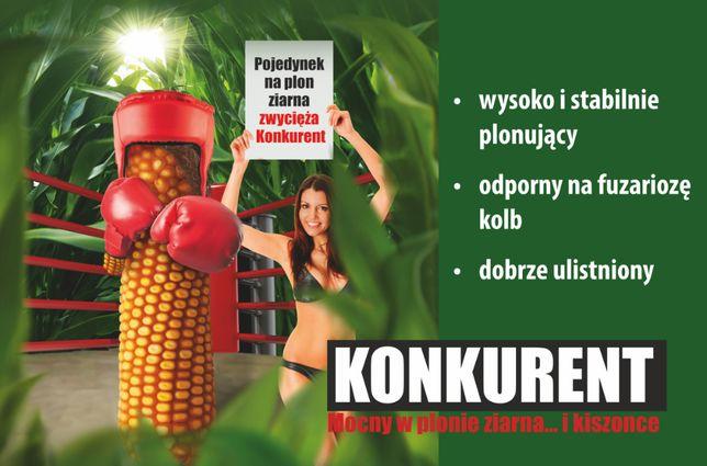Kukurydza KONKURENT 230-240 FAO Glejt Dumka Reduta Nasiona