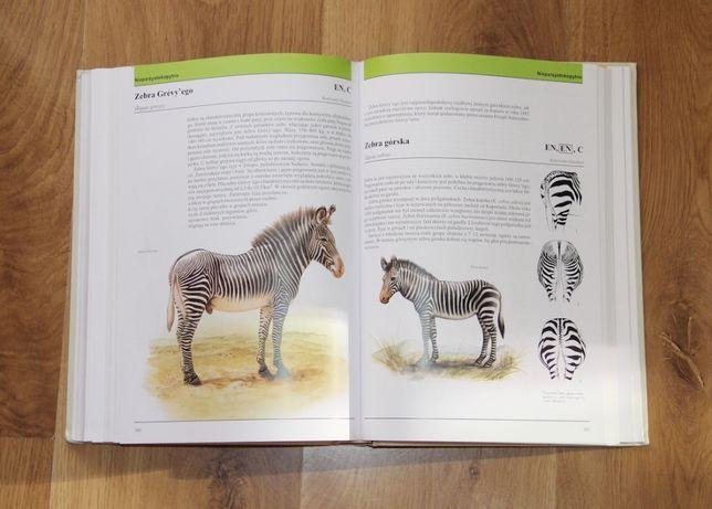Książka SSAKI ŚWIATA encyklopedia zwierząt album zwierzęta dziecko